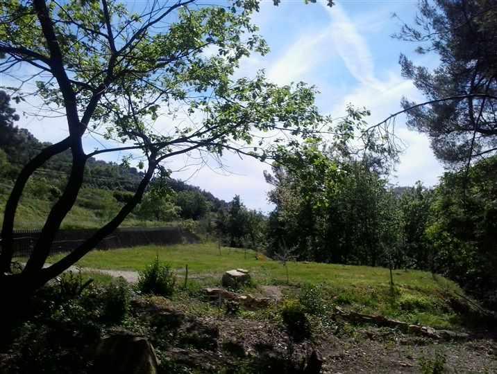 Terreno Edificabile Residenziale in Vendita a Vallebona