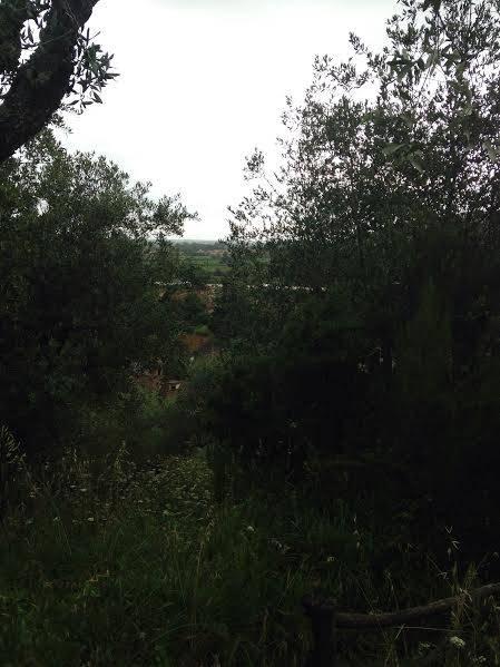 Terreno Agricolo in Vendita a San Giuliano Terme