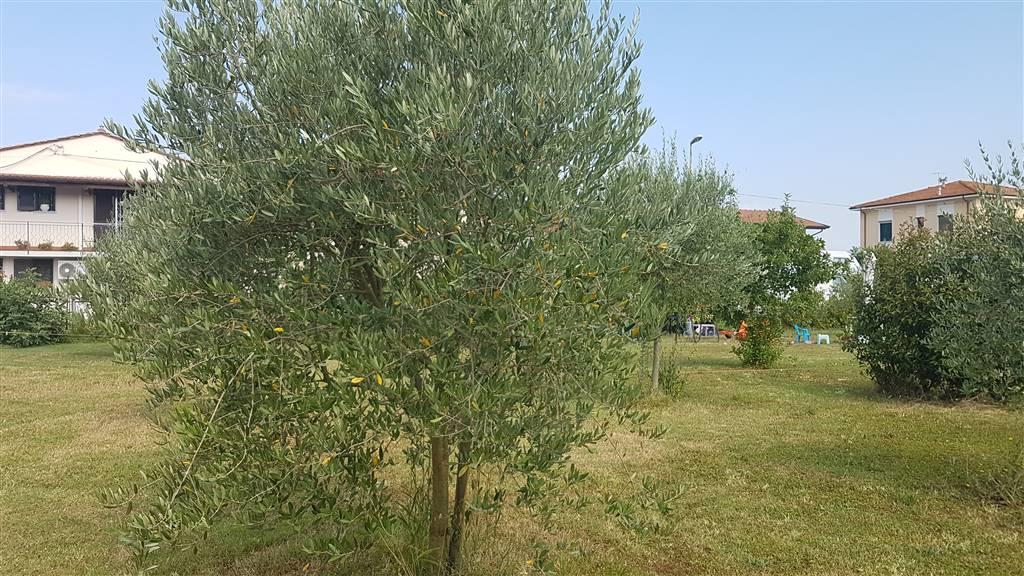 Soluzione Indipendente in vendita a San Giuliano Terme, 4 locali, zona Zona: Campo, prezzo € 190.000 | Cambio Casa.it