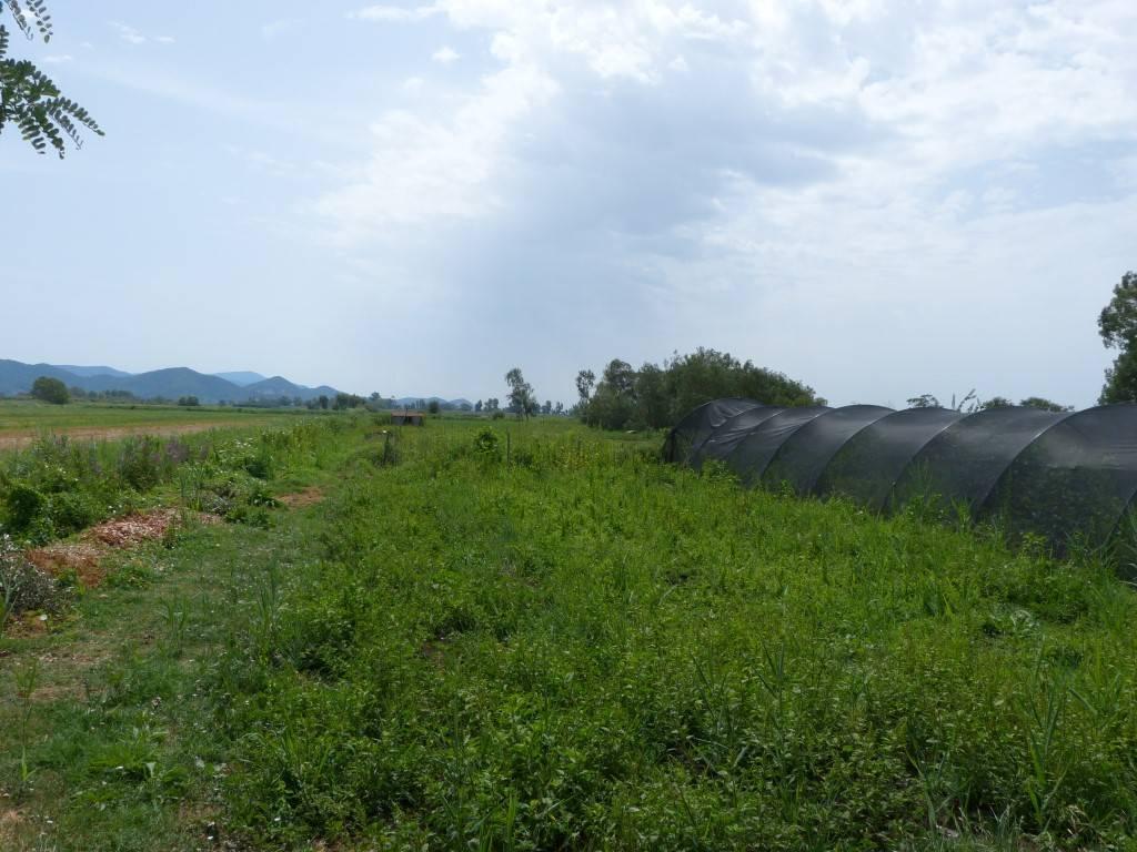 Terreno Agricolo in Vendita a Massarosa