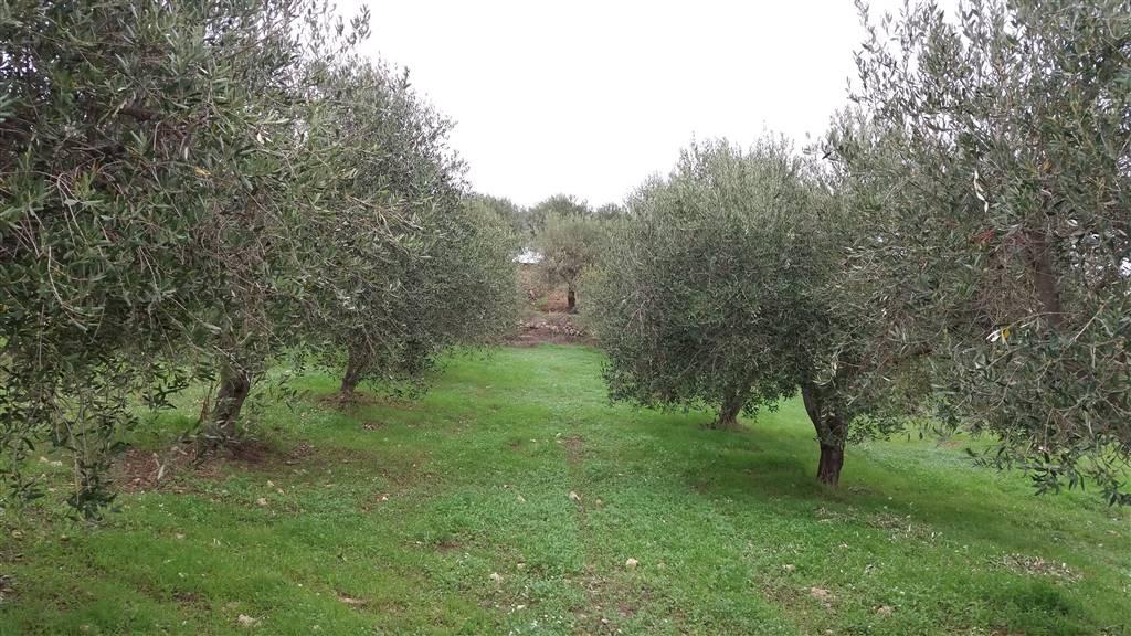 Azienda Agricola in vendita a Butera, 1 locali, prezzo € 660.000 | CambioCasa.it