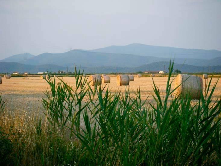 agriturismo-azienda agricola Vendita Castiglione Della Pescaia