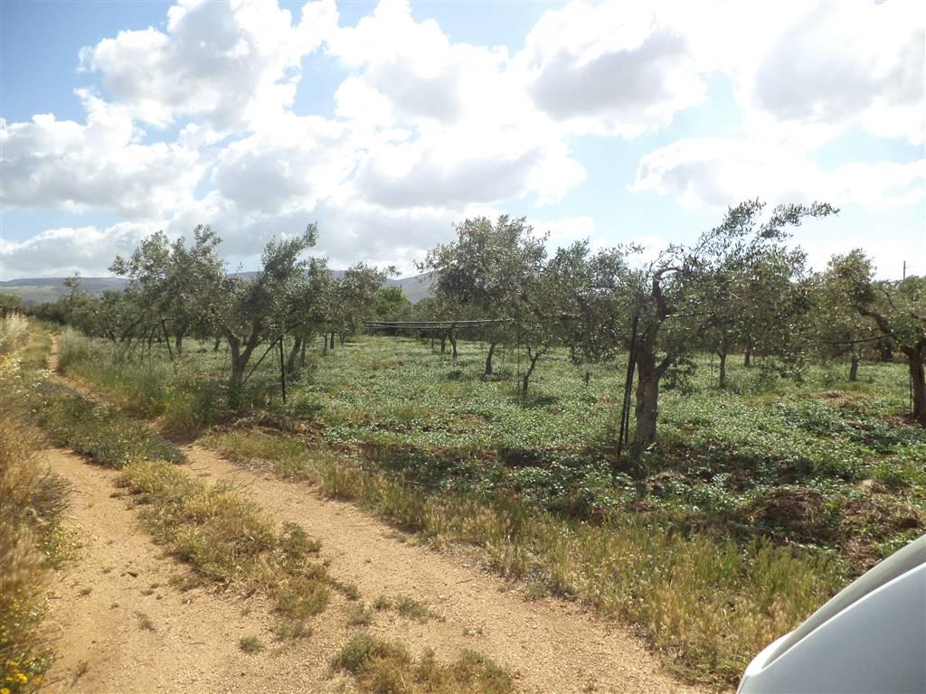 Terreno Agricolo in Vendita a Sciacca