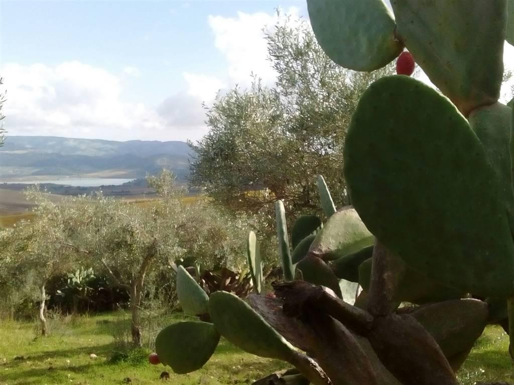 Terreno Agricolo in vendita a Santa Margherita di Belice, 9999 locali, prezzo € 67.500 | CambioCasa.it