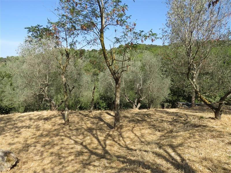 Terreno Agricolo in vendita a Riparbella, 9999 locali, prezzo € 22.000 | CambioCasa.it