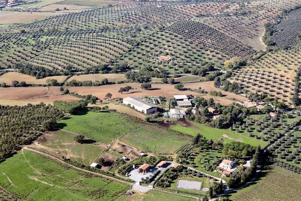 agriturismo-azienda agricola Vendita Orbetello