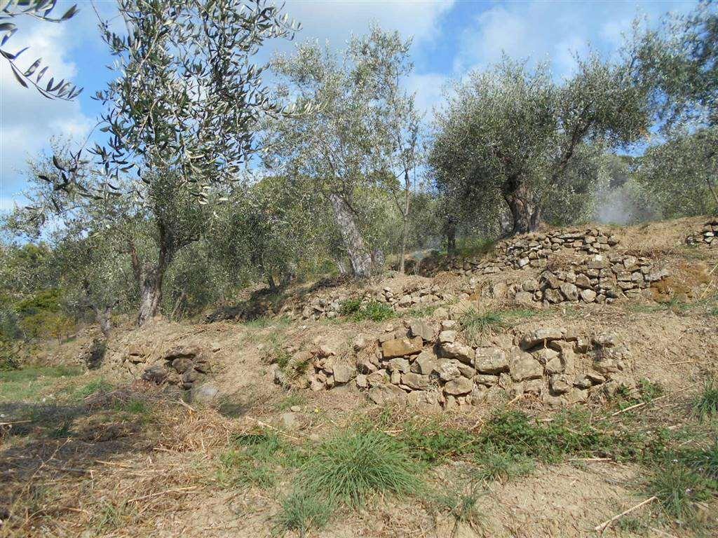 Terreno Edificabile Residenziale in Vendita a San Biagio della Cima