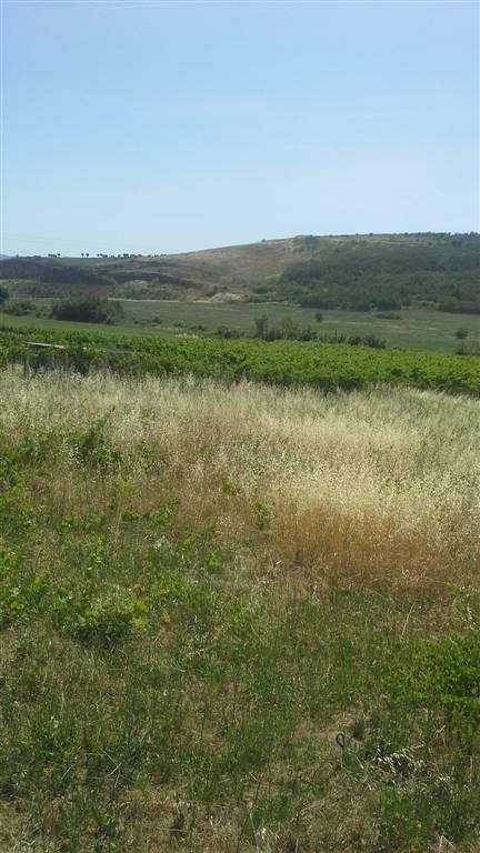 Terreno Agricolo in vendita a Zagarolo, 9999 locali, prezzo € 40.000 | CambioCasa.it