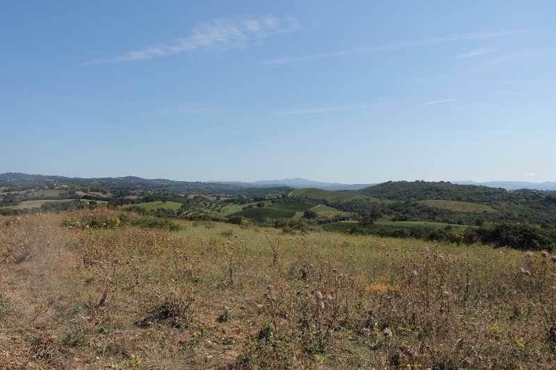 terreno edificabile Vendita Magliano In Toscana