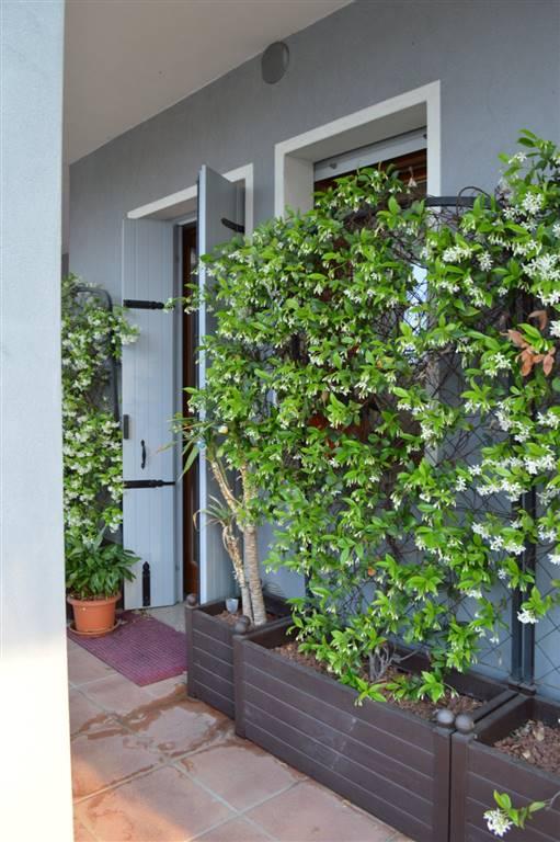 Appartamento in vendita a San Pietro Viminario, 2 locali, zona Zona: Vanzo, prezzo € 69.000 | CambioCasa.it