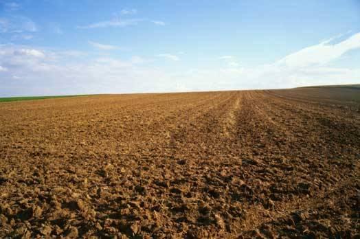 Terreno Agricolo in Vendita a Vetralla