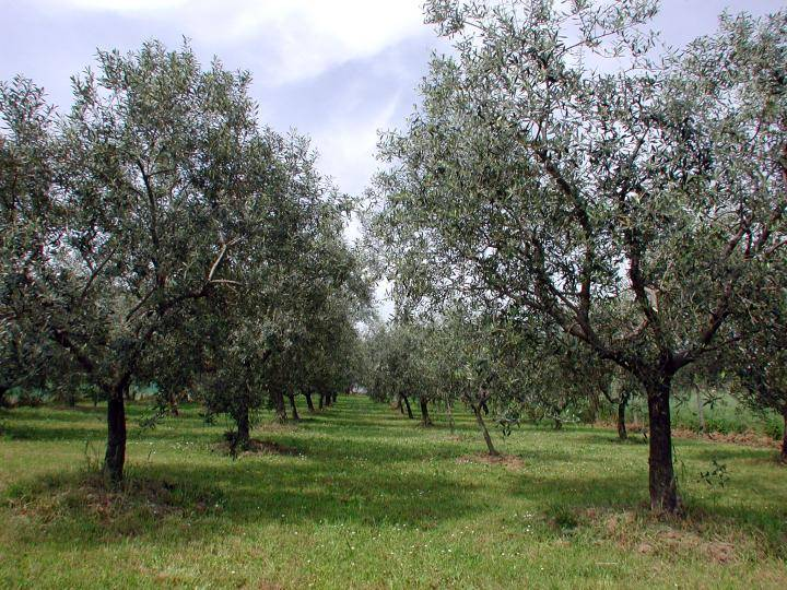 Terreno Agricolo in vendita a Vetralla, 9999 locali, zona Zona: Mazzocchio, prezzo € 25.000   Cambio Casa.it