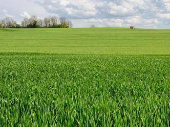 agriturismo-azienda agricola Vendita Amelia