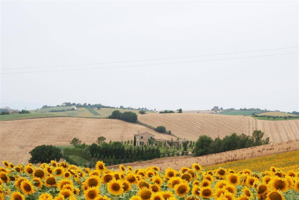 Villa-Villetta Vendita Montelupone