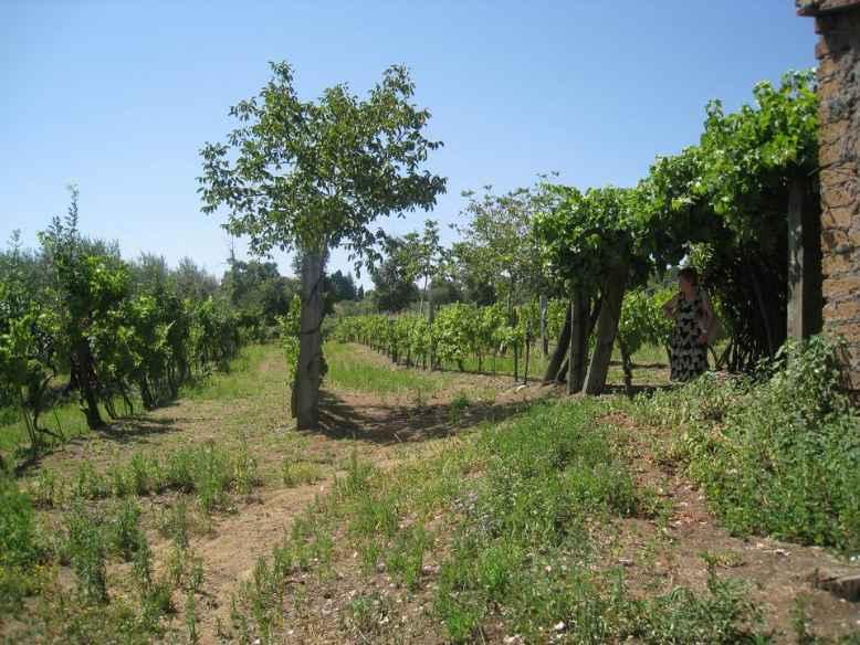 Terreno Agricolo in vendita a Montefiascone, 9999 locali, prezzo € 30.000 | CambioCasa.it