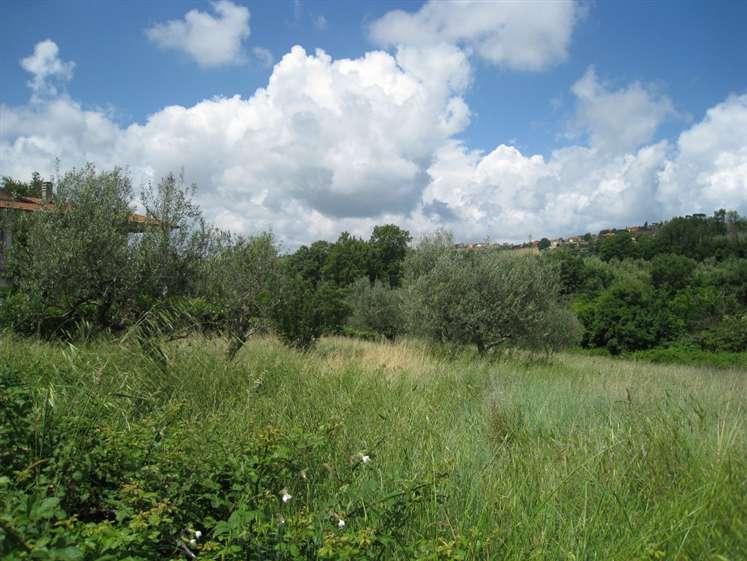 Terreno Agricolo in vendita a Montefiascone, 9999 locali, prezzo € 30.000   CambioCasa.it