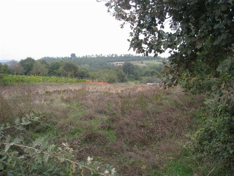 Terreno Agricolo in vendita a Montefiascone, 9999 locali, prezzo € 18.000 | CambioCasa.it