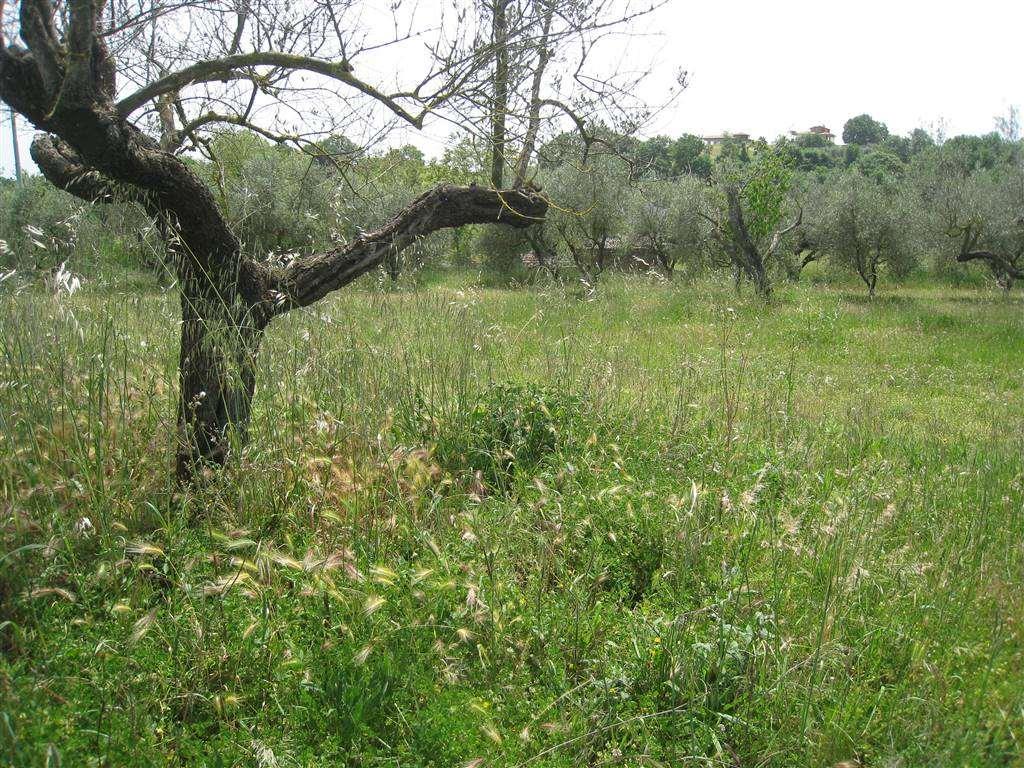Terreno Agricolo in vendita a Montefiascone, 9999 locali, zona Zona: Zepponami, prezzo € 33.000 | CambioCasa.it