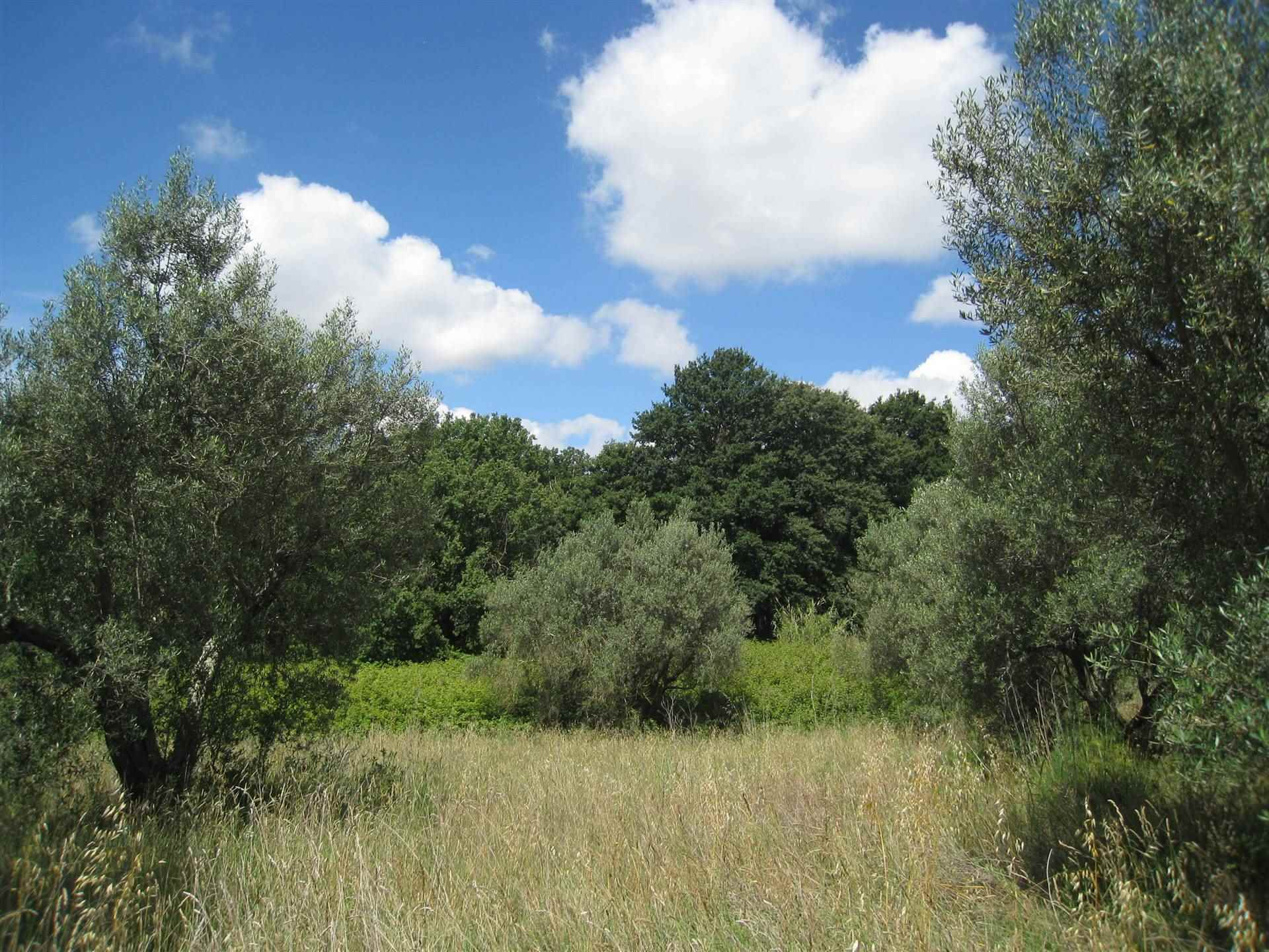 Farming plot of land in MONTEFIASCONE