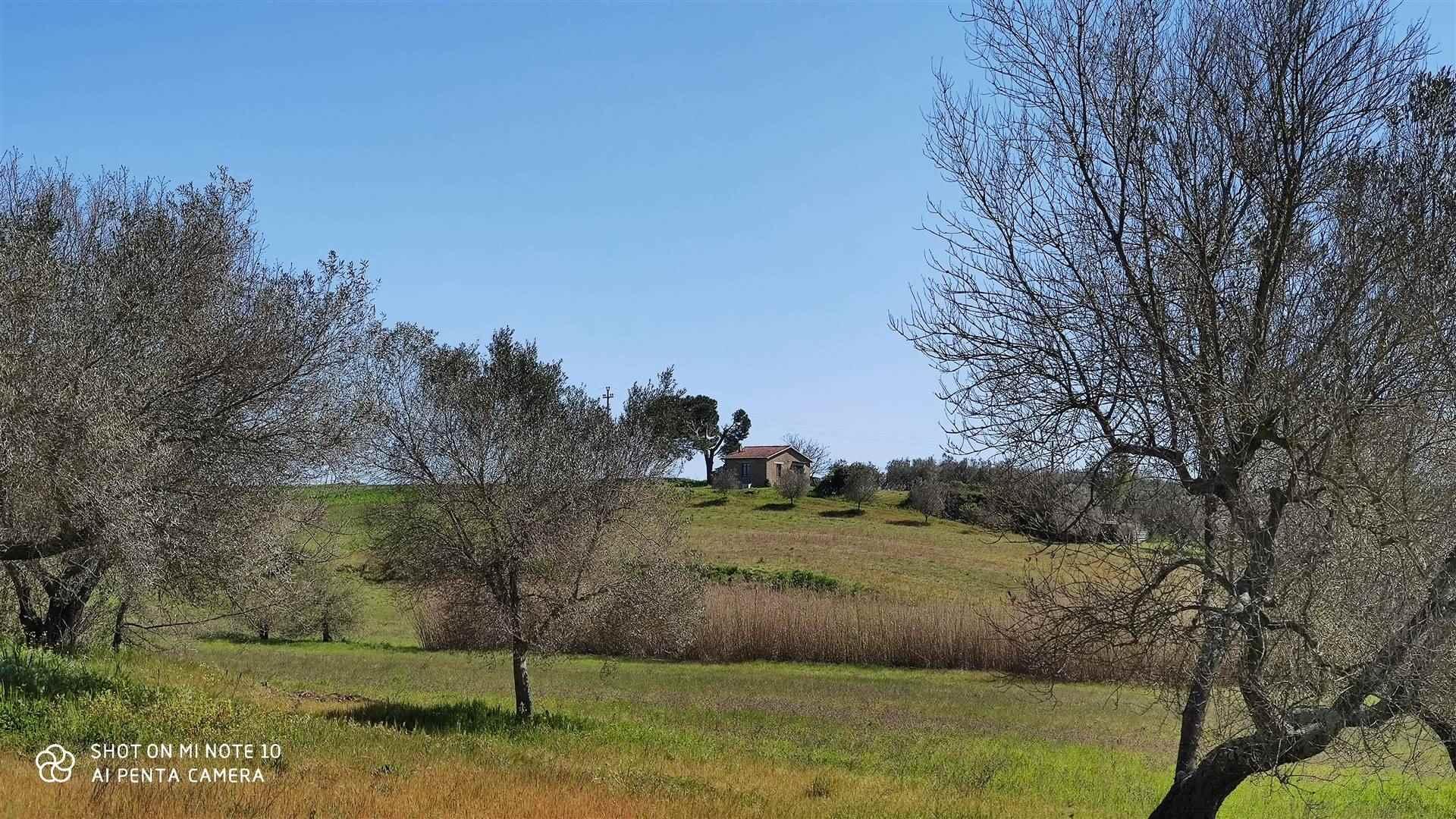 Terreno Agricolo in vendita a Montefiascone, 1 locali, zona Zona: Commenda, prezzo € 120.000 | CambioCasa.it