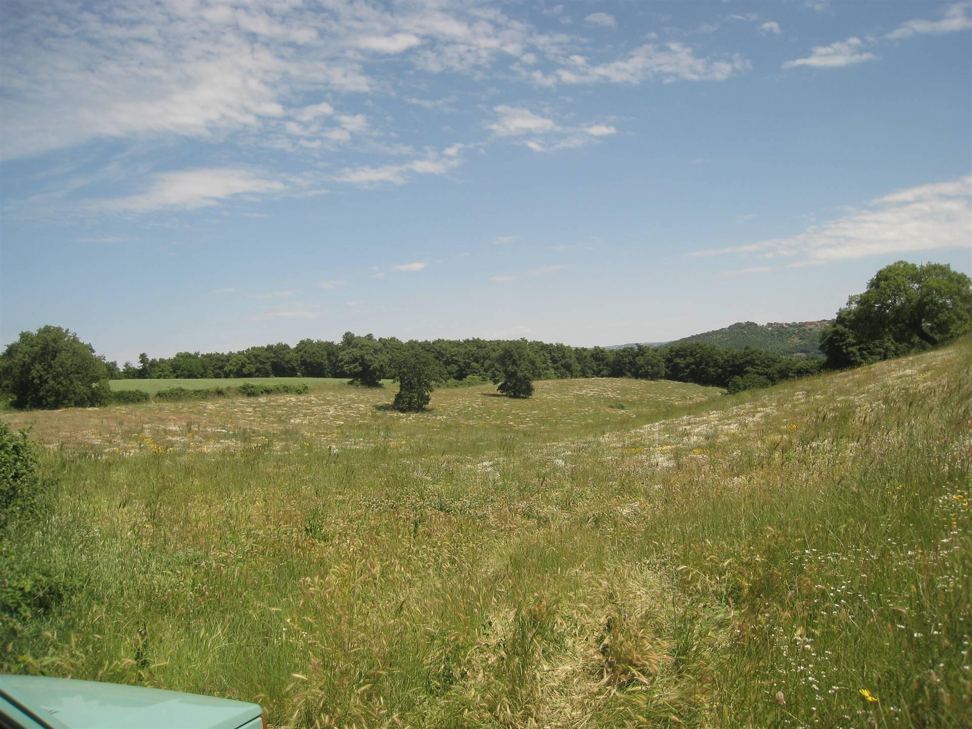 Terreno agricoloaMONTEFIASCONE