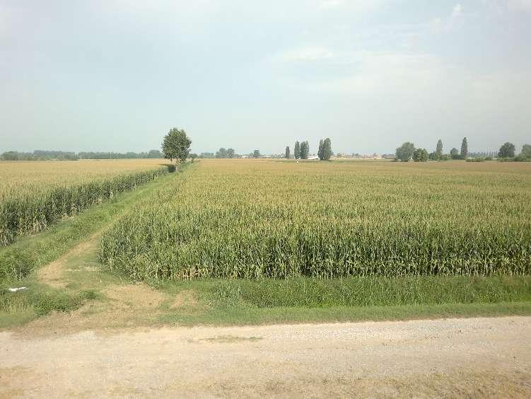 Annunci immobiliari di terreni agricoli veneto terreno - Diritto di passaggio su terreno agricolo ...