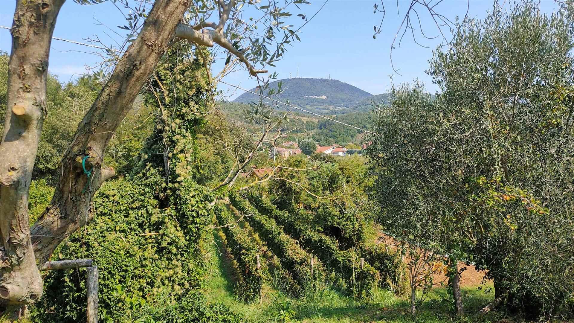 Soluzione Indipendente in vendita a Cinto Euganeo, 6 locali, zona Località: VALNOGAREDO, Trattative riservate | CambioCasa.it