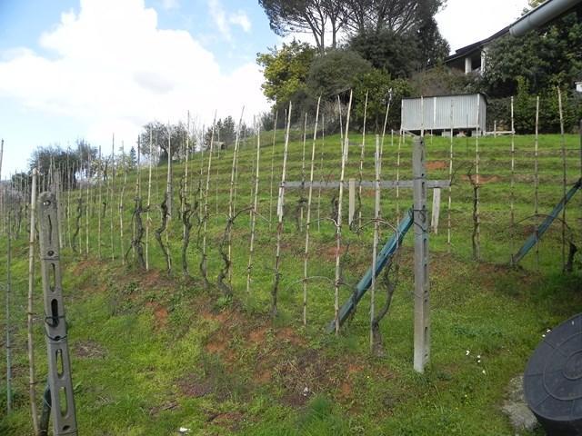 Terreni agricoli lucca in vendita e in affitto cerco - Diritto di passaggio su terreno agricolo ...