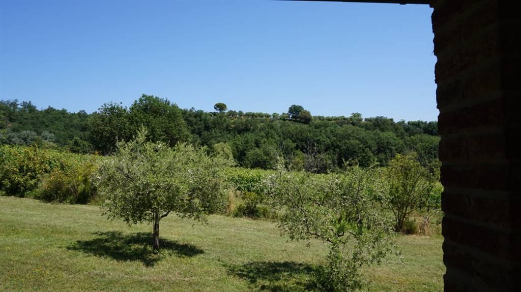 Vista panoramica Panoramic View