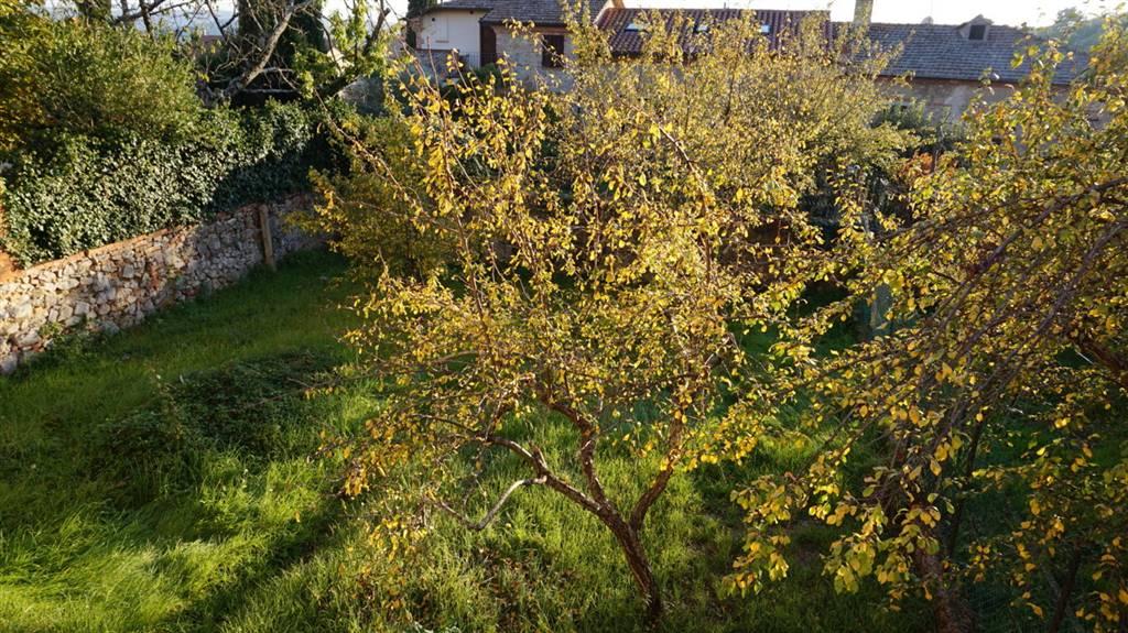 Giardino / Garden