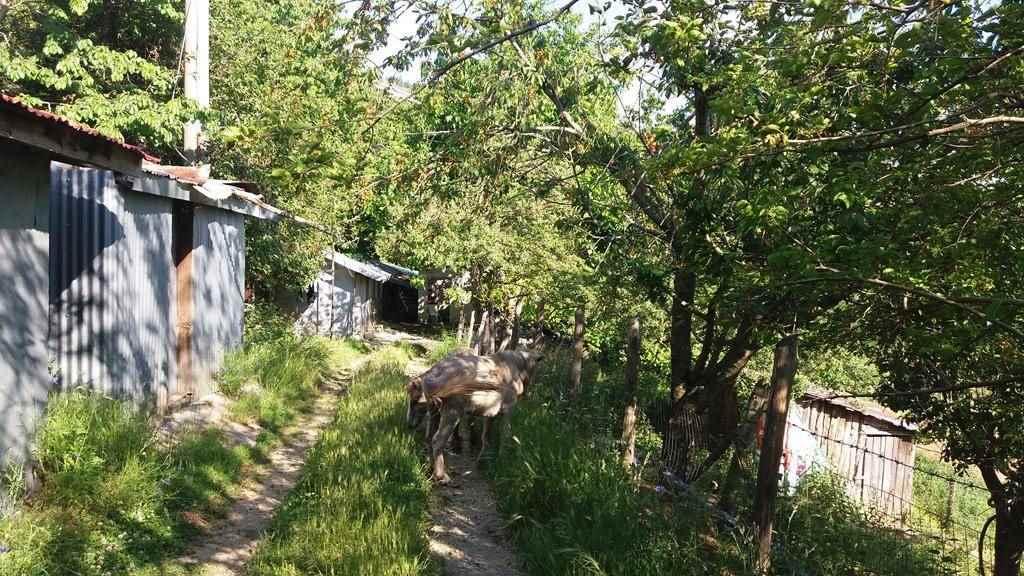 Terreni agricoli cosenza in vendita e in affitto cerco - Diritto di passaggio su terreno agricolo ...