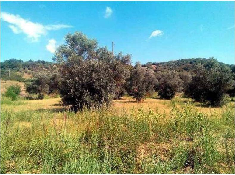 Terreno Agricolo in vendita a Rende, 9999 locali, zona Località: SURDO, prezzo € 55.000 | CambioCasa.it