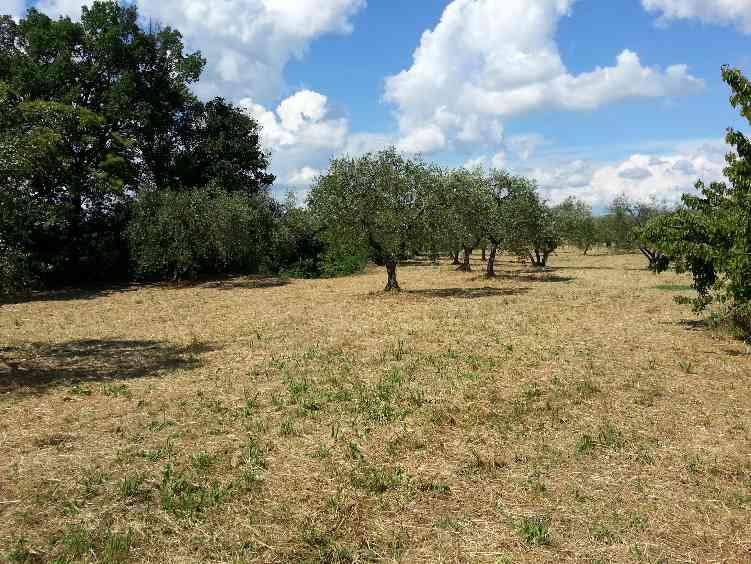 Terreno agricolo, Celleno