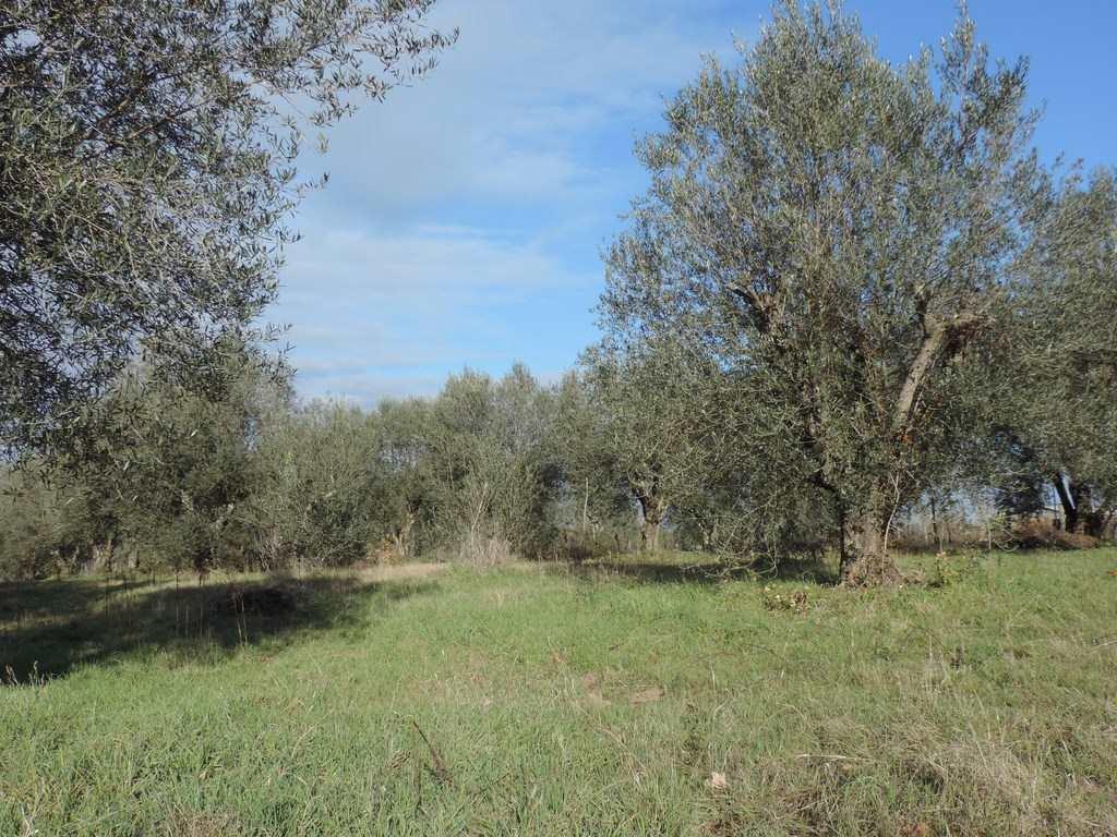 Terreno agricolo in Loc. Dogane, Vetralla