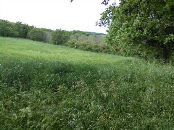 Terreno agricolo in Via Aurelia Bis, Monte Romano