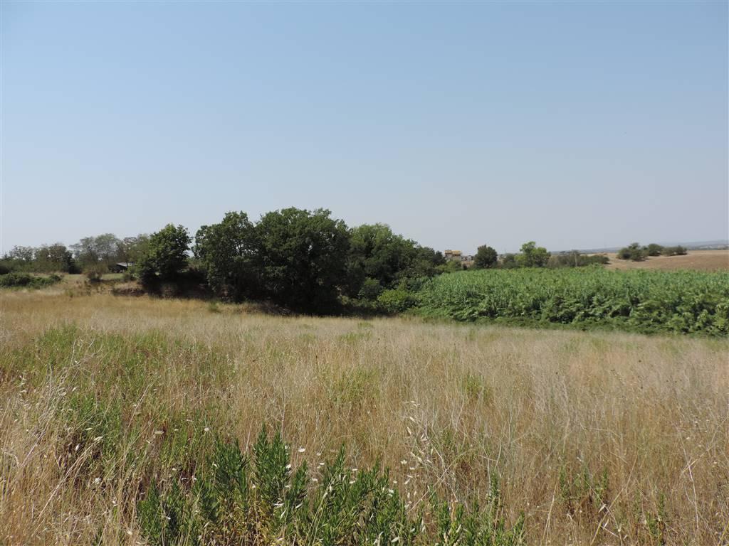 Terreno agricolo, Periferia, Viterbo