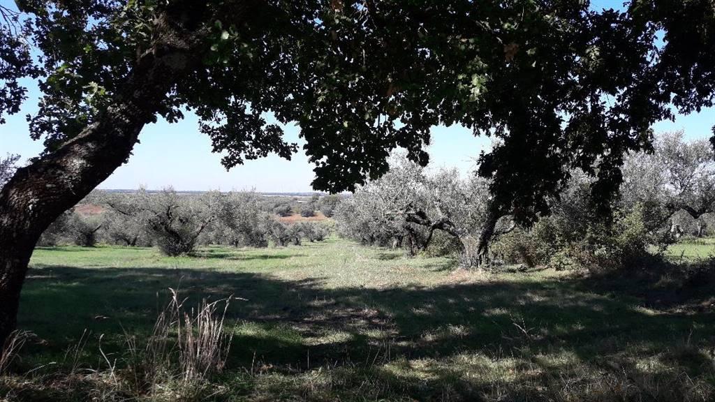 Terreno agricolo, Marta