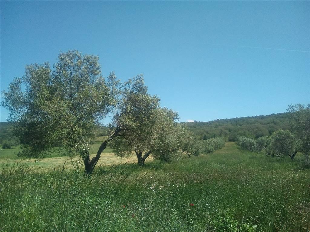 Terreno agricolo, Monte Romano