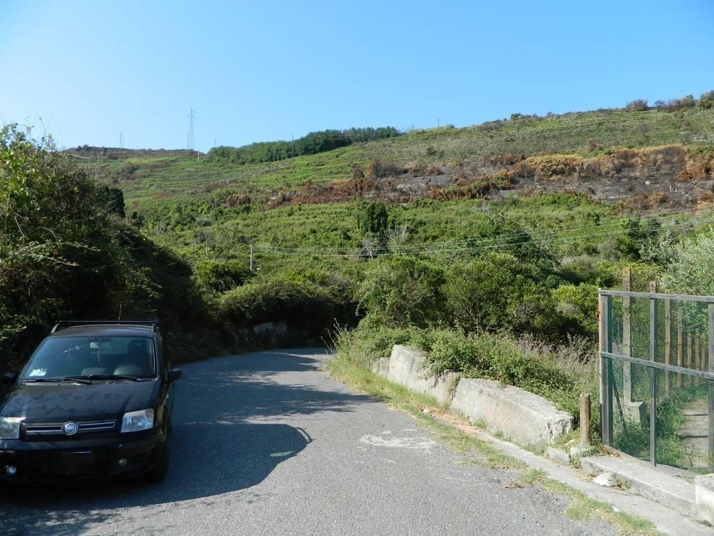 Terreno agricolo in Contrada Fiorentino, Villafranca Tirrena