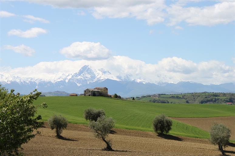 Azienda Agricola in vendita a Mosciano Sant'Angelo, 9999 locali, zona Zona: Collepietro, Trattative riservate | CambioCasa.it