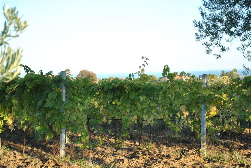 Terreno Agricolo in vendita a Giulianova, 9999 locali, Trattative riservate | CambioCasa.it
