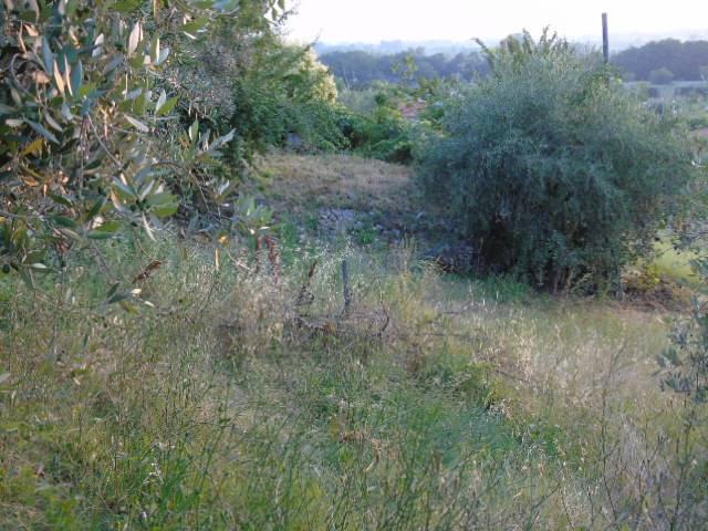 Terreno Agricolo in vendita a Roseto degli Abruzzi, 9999 locali, zona Zona: Cologna Spiaggia, Trattative riservate | CambioCasa.it