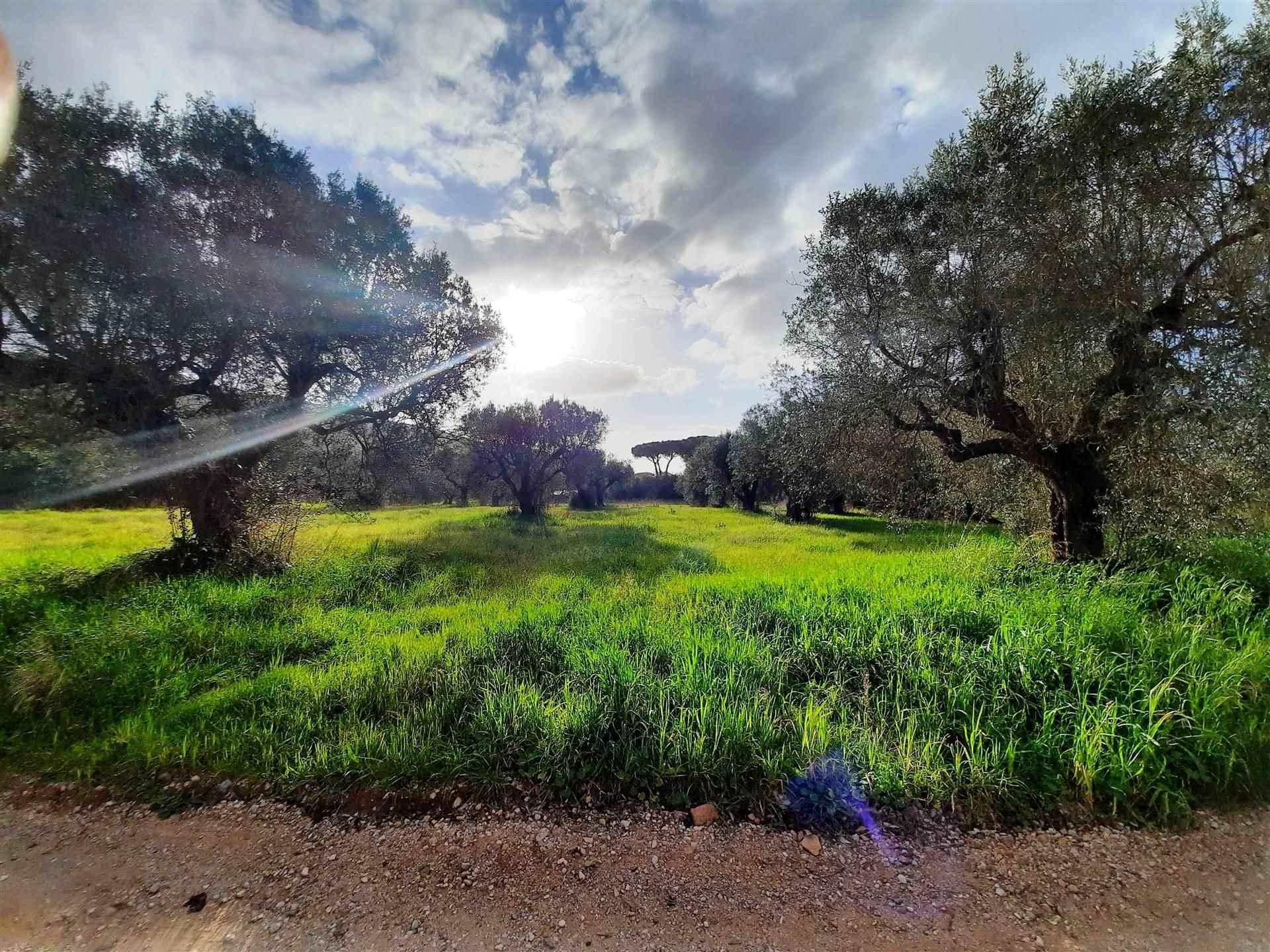 Terreno Agricolo in vendita a Orbetello, 9999 locali, zona Località: QUATTRO STRADE, prezzo € 55.000 | CambioCasa.it