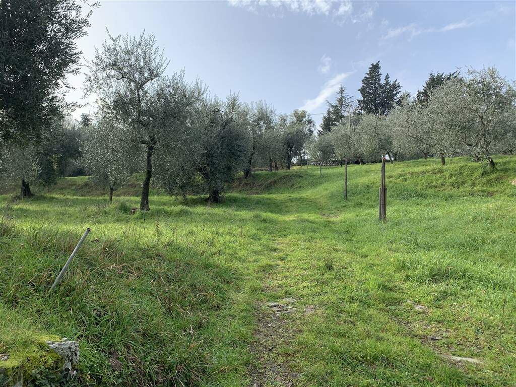 IL COLLE, CALENZANO, Farming plot of land for sale of 6000 Sq. mt., Energetic class: G, composed by: , Price: € 110,000