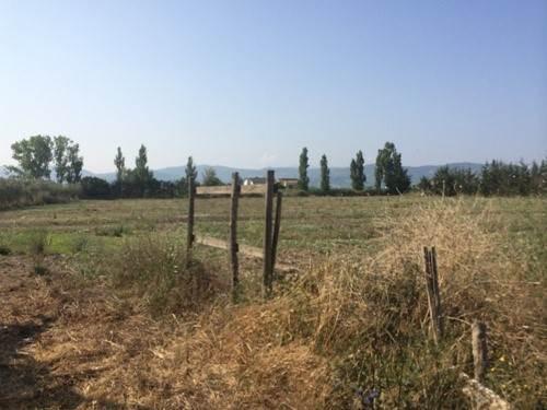 Terreno Agricolo in vendita a Capaccio, 9999 locali, zona Zona: Paestum, prezzo € 89.000 | CambioCasa.it