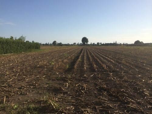 Terreno Agricolo in vendita a Capaccio, 9999 locali, zona Zona: Gromola, prezzo € 58.000 | CambioCasa.it