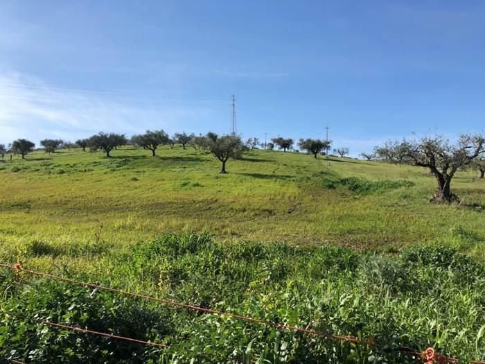 Terreno Agricolo in vendita a Capaccio, 9999 locali, zona Località: Masseria Orto Nero, prezzo € 103.000 | CambioCasa.it