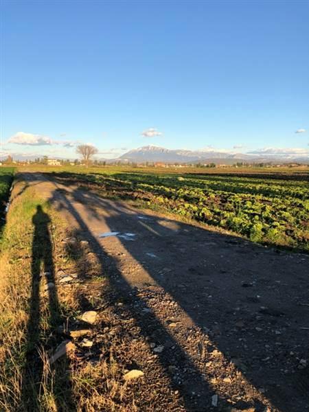 Terreno Agricolo in vendita a Capaccio, 9999 locali, zona Zona: Gromola, prezzo € 96.000 | CambioCasa.it