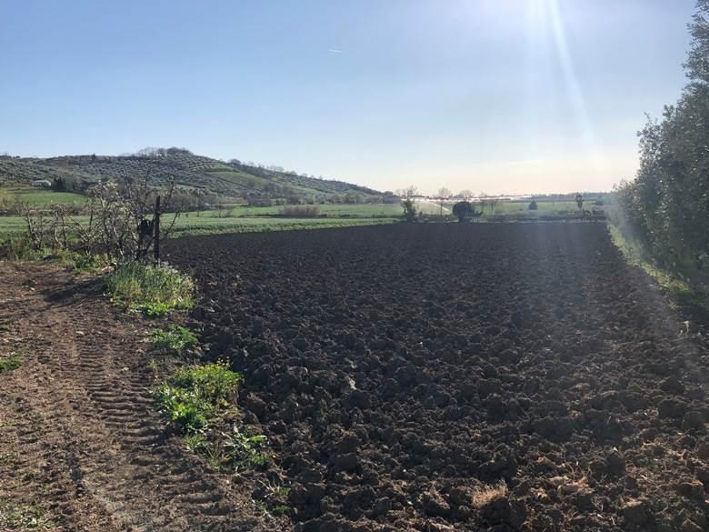 Terreno Agricolo in vendita a Capaccio, 9999 locali, zona Zona: Ponte Barizzo, prezzo € 79.000 | CambioCasa.it