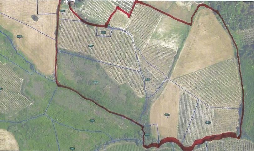 Terreno Agricolo in vendita a Bertinoro, 9999 locali, zona Zona: Bracciano, prezzo € 169.000   CambioCasa.it